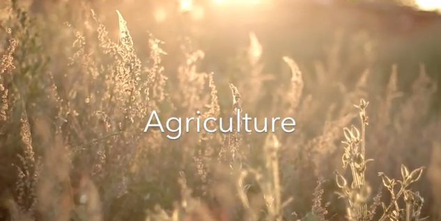 Video Thumbnail for Teen Shows Ag's Impact on Alabama in Award-Winning Video