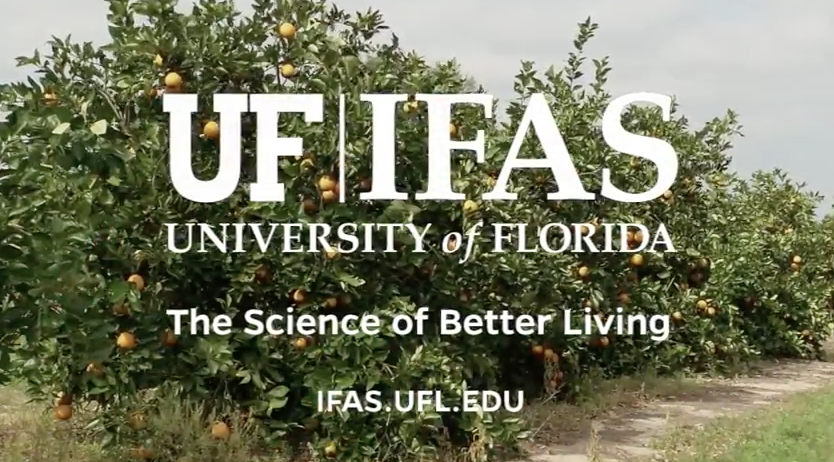 Video Thumbnail for Citrus Greening Research Gets $1 Million in State Budget Funding