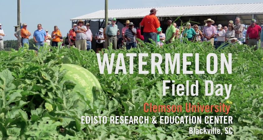 Video Thumbnail for Clemson Watermelon Field Day Gets Straight to the Bottom Line