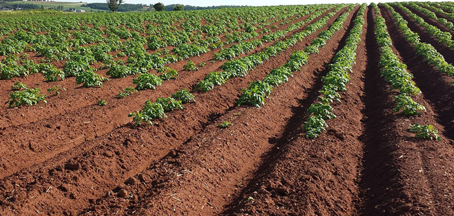 Soil health check up assess improve growing south for South carolina soil